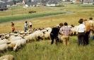 1979 - Hammelfang